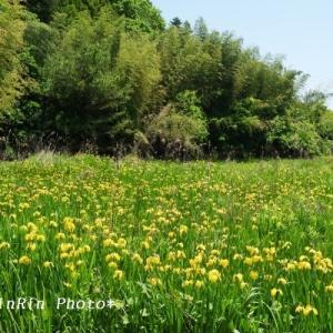 飯能市の花*花を訪ねるチャリ散歩No.4