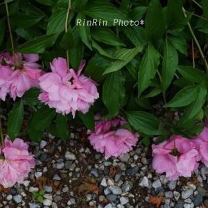 飯能市の花*雨後の花in浄心寺