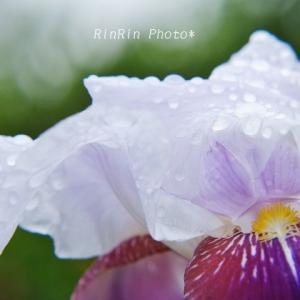 飯能市の花*雨後の花in浄心寺No.2