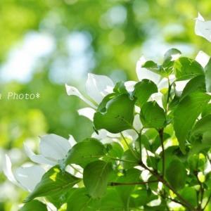 飯能市の花*午後の家チカ寺-心應寺