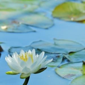 飯能市の花*チャリ散歩でいろいろ-ニコニコ池