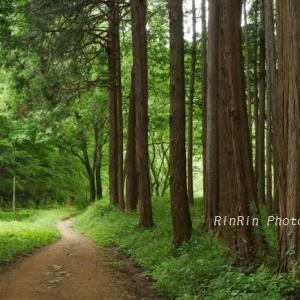 飯能市の風景*5月最終日のチャリ散歩in多峯主山
