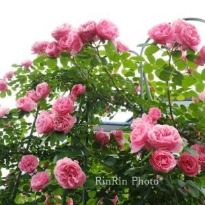 飯能市の風景*5月最終日のチャリ散歩in薔薇の庭再訪
