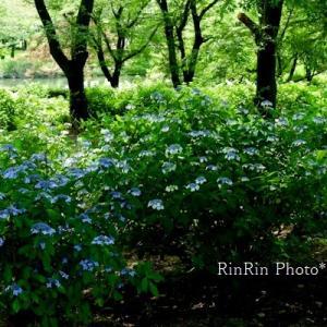 狭山市の花*智光山公園de花散歩No.2