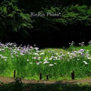 狭山市の風景*智光山公園de花散歩No4
