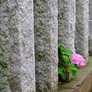 飯能市の花*花待ちの日々