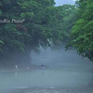 飯能市の風景*6月の家チカ花散歩-飯能河原