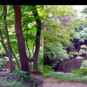 日本庭園の立体視写真で視力回復トレーニング #01