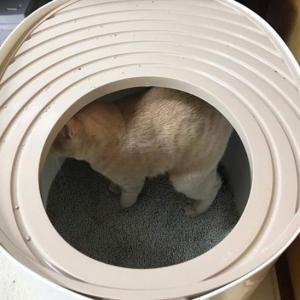 猫のトイレ~何見てんのよ~