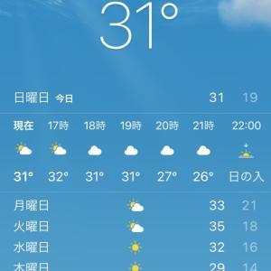 やっと夏到来!