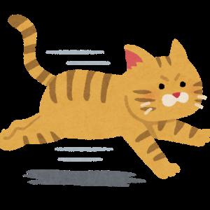 【○T2-D1】「走る」が虎の生きる道。貫いて逆転勝ち【阪神】210514