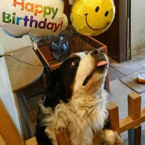 フーたん 12歳お誕生日おめでとう PART2