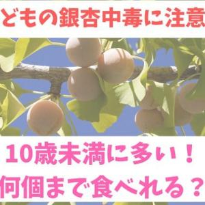 子どもの銀杏中毒に注意【10歳未満に多い|何個まで食べていい?】