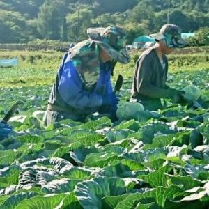 外国人技能実習生の入国停止で農業の人手不足が深刻 ・・外国人に頼るリスクを思い知ったことは、ある意味コロナの功績か