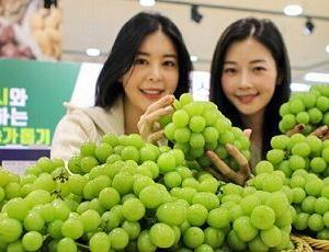 韓国「シャインマスカット栽培技術の起源は韓国、日本は諦めて品種登録しなかった」・・・盗人猛々しい!!