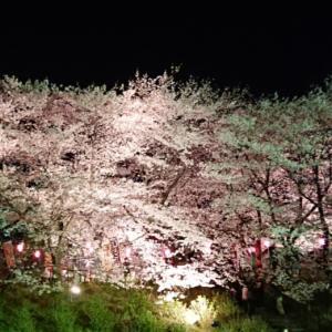 権現堂桜を見に行って来ました!!