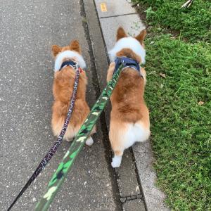 こむつむ散歩