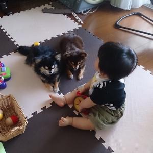 赤ちゃんとワンコの生活。
