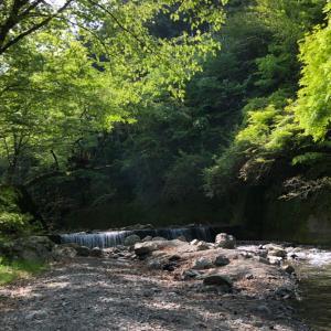 大井川と茶畑キャンプ