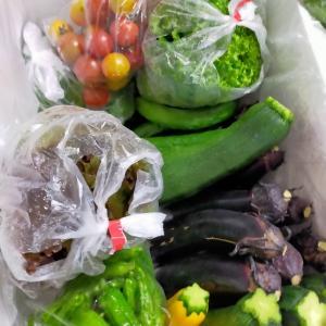 新鮮野菜が届きました!