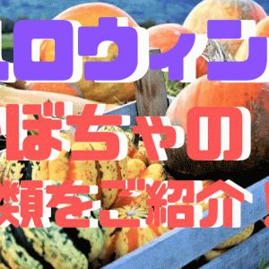 ハロウィンで飾る【かぼちゃ】おもしろい種類を厳選してご紹介!!