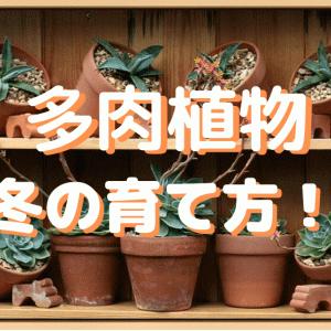 【多肉植物】冬の育て方は?|寒くても枯らさない冬越し方法!