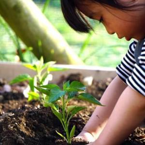 子供の感受性を豊かにする!家庭菜園の話