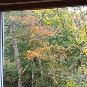 駆け足で過ぎていく秋
