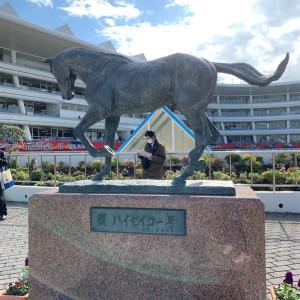 中山競馬場に行ってきました!