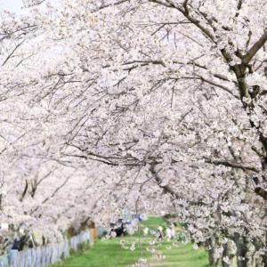 2020年・桜
