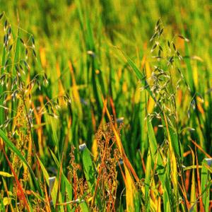 雑草の駆除を楽に済ませるたった1つの方法【草むしりはプロに依頼】
