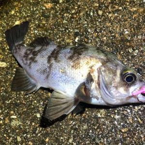 北風爆風で荒れた海でも釣りに行く💪