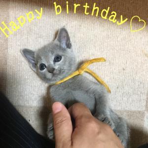 愛犬の日に猫の誕生日