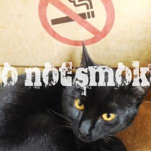 テレビで避難所にペットの話題をやってる、難しい問題ですよね。でも、ペットよりも喫煙者や香害さんの議論もして欲しい。