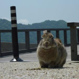 広島県大久野島のウサギと風景の著作権フリー写真素材その2です。