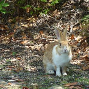 広島県大久野島のウサギと風景の著作権フリー写真素材その3です。