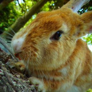 広島県大久野島のウサギと風景の著作権フリー写真素材その10です。