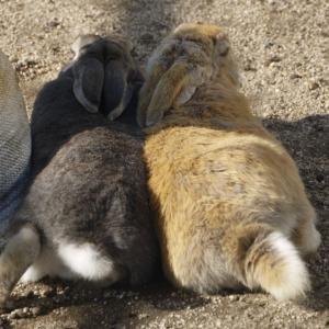 広島県大久野島のウサギと風景の著作権フリー写真素材その8です。