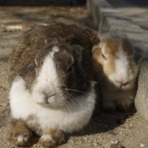 広島県大久野島のウサギと風景の著作権フリー写真素材その7です。