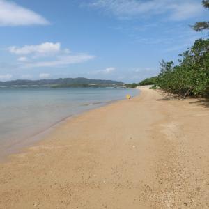 石垣島に出かけようPART5!今日も貝殻を探しにいく