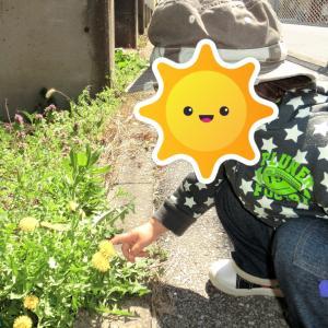 息子1歳の頃に撮ったお気に入りの写真。タンポポ見つけた