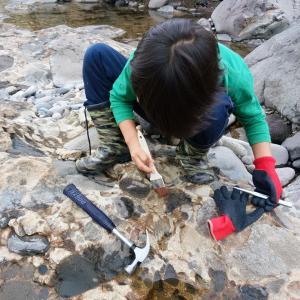 化石を探しに行こう(昔の世界をリアルに感じよう)