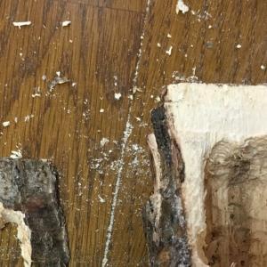 オオクワガタ 隠れ家 樹洞付き 自作