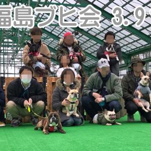 【フレンチブルドッグ イベント】福島ブヒ会 3.9(?)