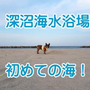 【ワンちゃんとお出かけスポット】深沼海水浴場で初めての海♪