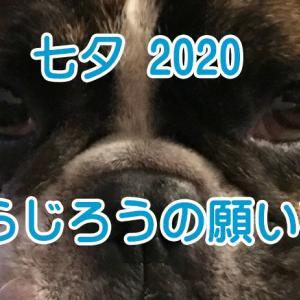 【フレンチブルドッグイベント】七夕2020 とらじろうの願い事