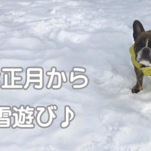【フレブルの何気ない日常】新年から雪遊び♪