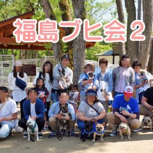 【フレンチブルドッグ イベント】福島ブヒ会2