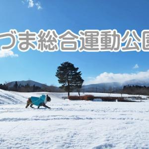 【ワンちゃんとお出かけスポット】あづま総合運動公園? スンゴイ雪で別世界!