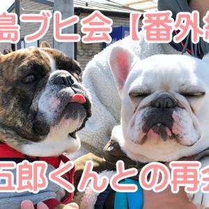 【フレンチブルドッグ イベント】福島ブヒ会 春の芋煮会 2021【番外編】